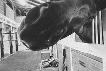 Hesterbestogfest