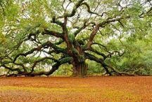 Trees/Árboles