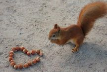 Cute critters_Squirrels