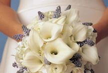 Bridal Flowers / by Ceci B Photography