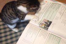 THE CAT 'Nina'