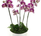 Beverly Hills Orchids