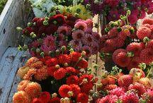 Farmer's Market / by Dawn Jostiak