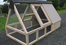 Chicken & Coops / by Belinda Duett