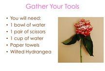 Event Ideas - Floral