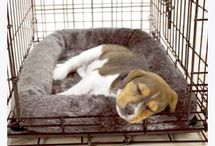 Crate Training / Crate training should be a positive experience for the dog and human so that a dog feels that the crate is a safe place when they want to relax and get away from the commotion of the day.