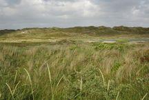 Nymindegab / Nymindegab hat ein herliches Naturschutzgebiet, welches südlich am Holmsland Klit zwischen Nordsee und Ringkøbing Fjord liegt.