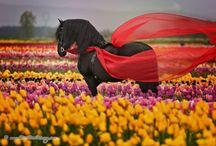 Cavalos / Cavalos e seus significados