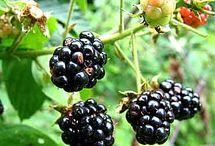 Raspberry and blackberry! Enough said!
