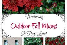 Fall Craft Ideas / Outside Fall Ideas