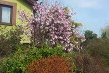 spring / ogród, rośliny