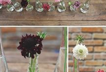 Scabiosa are super