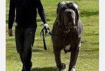 los perros mas grandes