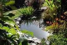 Jardinería estanques