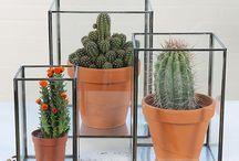 loods 5 cactus in vitrine