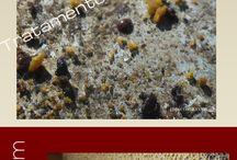 Livros e cursos online - e-books and Online Course / apicultura - apicultura natural - apicultura eficiente - abelhas - bees - beekeeping - natural beekeeping - apicultura natural – orgânica – abelhas -bees - beekeeping - negócio apicola - e-course - e-book - info-produtos - aprender apicultura - mel de abelha - honey bee - beekeeping for beginners - equipment - equipamento - apiario - apiary - hives - colmeias - queen bees - abelhas rainha - em casa