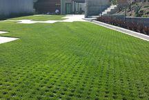 трава газон
