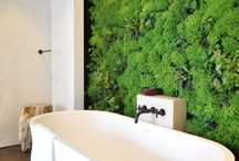 Living wall in interiors