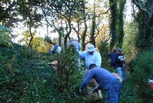 Stone Harbor Bird Sanctuary Work Day / Here are pictures of the first of many planned volunteer efforts to remove invasive species in the Stone Harbor Bird Sanctuary. Maintaining native vegetation is a critical component of natural areas maintenance.
