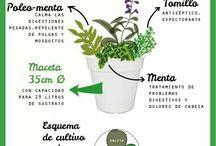 cultivos y plantas