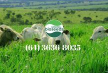 Vídeos Bioseeds