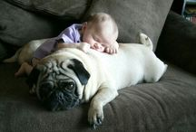 Pugs With Babies