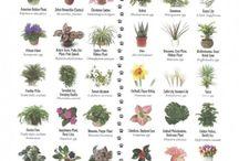 PET & PLANTS