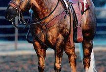 Horse beauties