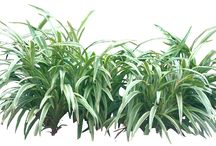 cutoutplants