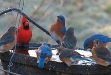 Bird Lover Gift Ideas #BirdFeeders #Birds #BirdFeeding