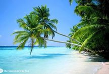 Tropical / by Linda Large-Menkhoff