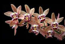 Vídeos com orquídeas
