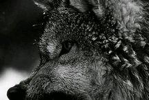 H.Köpekler