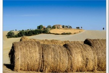 Our Land / Valdera and Pisa district, Tuscany