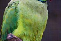 feathered friends / by Sammie Clark