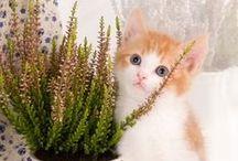 Plante toxice pisici