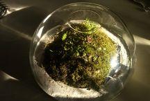 florarium terrarium
