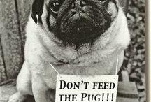 Pugs ❤