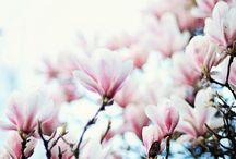 - Magnolia -