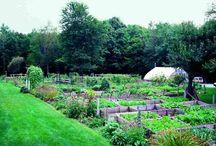G R O W    s p a c e / living food - organic veg, edible flowers