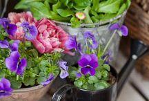 Trädgårds blommor idéer