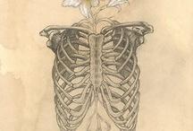Tattoo / by Amanda Lorenz