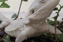 Reptiles(Snakes, crocodiles, lizards, dinosaurs and so on)