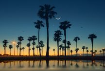 California Dreams / by Liz Baughier