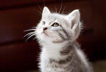 chatons♡