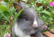 kleine süße Kaninchen