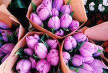 Flowers & Plants / by Andrea Hogan