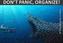 Don't Panic, Organize / by Staci Vu