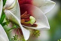 Ogród i kwiaty