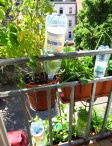 Garten + Balkon